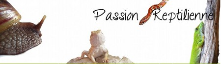 Passion Reptilienne
